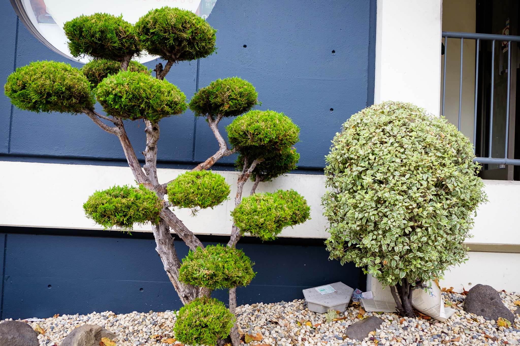 Bushes in Japantown