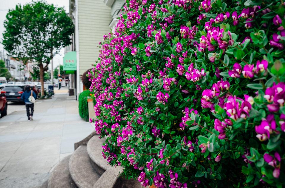 Flowery bush